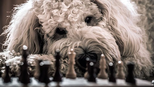 dog chess